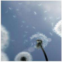 Les allergies s'expriment plus fortement à l'intérieur des logements